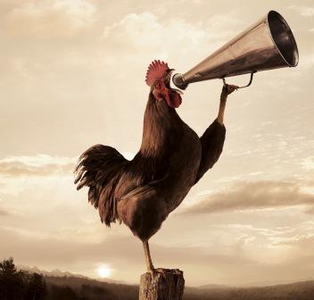 rooster_crop_web.jpg
